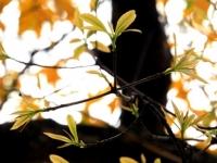 """Truyện ngắn: """"Vòng đời của chiếc lá"""""""