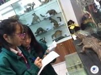 Học tập trải nghiệm tại Bảo tàng sinh học cùng các bạn học sinh khối 7