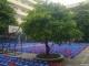 Cùng đến thăm trường Nguyễn Tất Thành của chúng mình nhé!