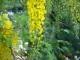 Dòng hồi ức màu vàng